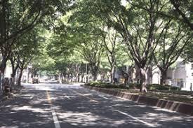 昭和60年の定禅寺通り。昭和33年の写真の白い車の位置から